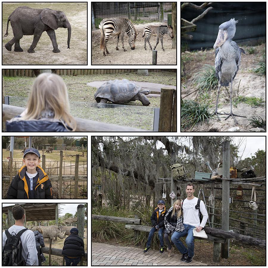 Tampa_zoo-001