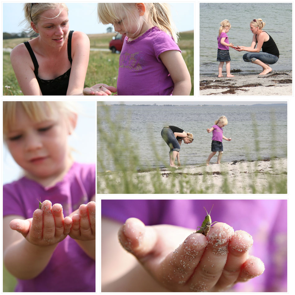 Finding seashells and grasshoppers
